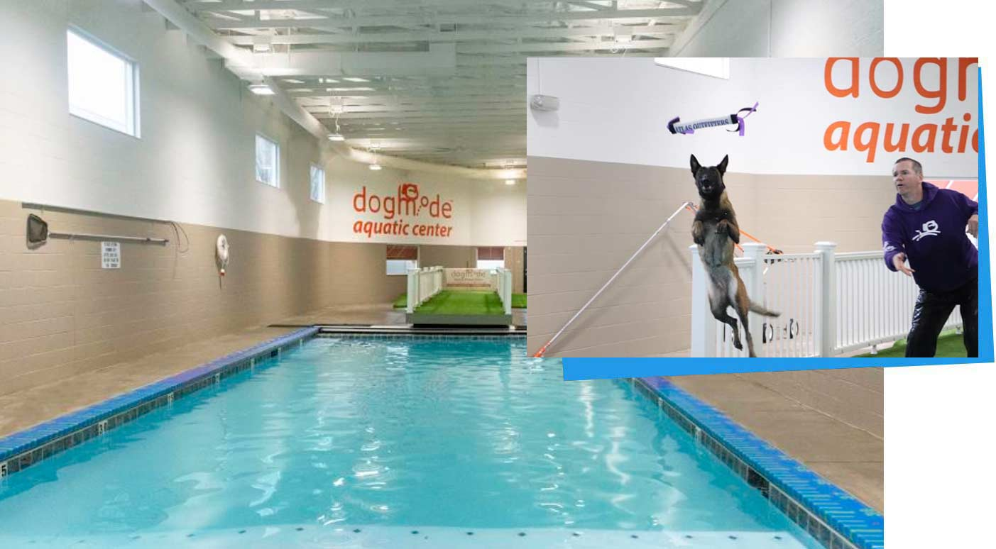 pool for dogs utah